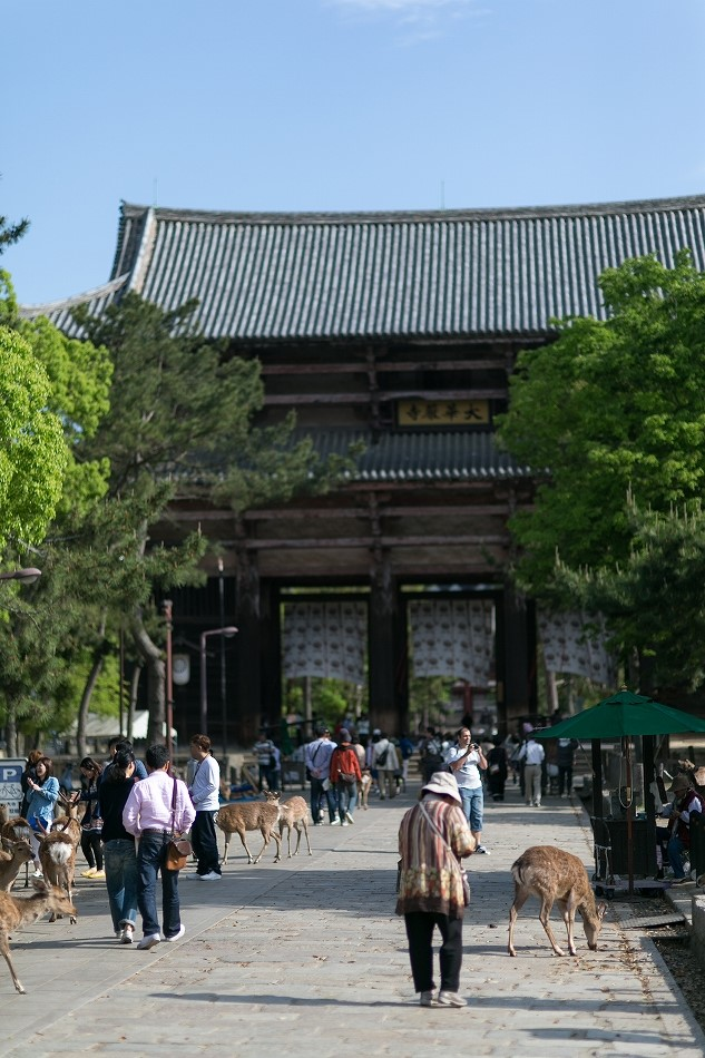 GW東大寺は京都並み-9