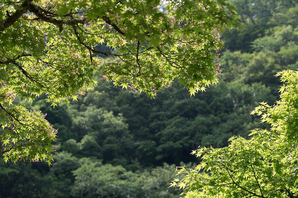 実はこの時期の香嵐渓が好き-5