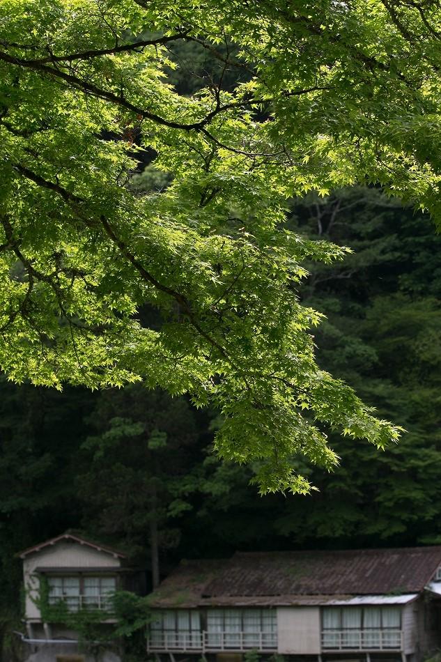 実はこの時期の香嵐渓が好き-4