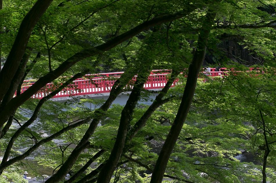 実はこの時期の香嵐渓が好き-1