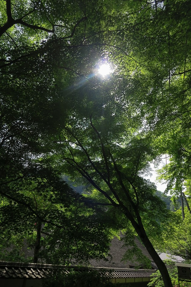 実はこの時期の香嵐渓が好き-10