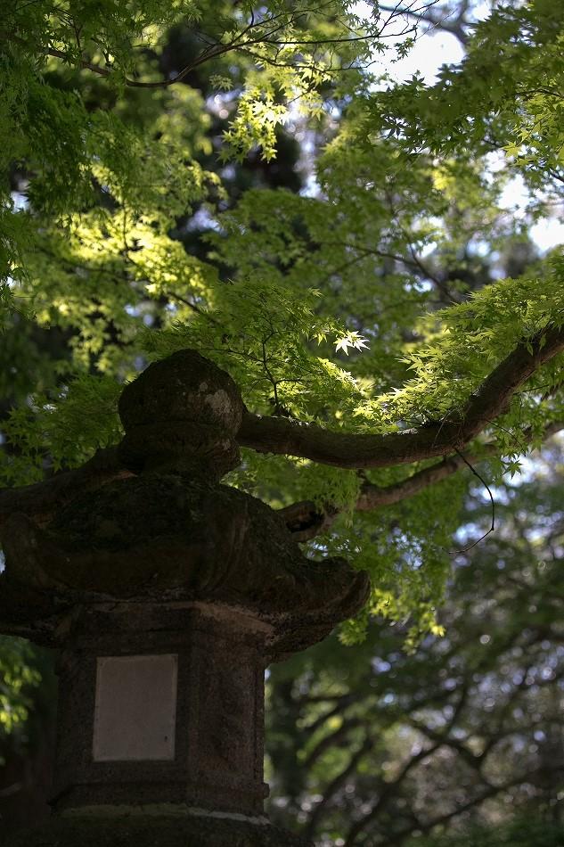 GW東大寺は京都並み-25