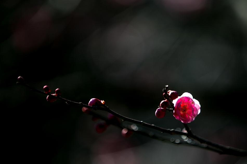 for_pakuriou-3.jpg