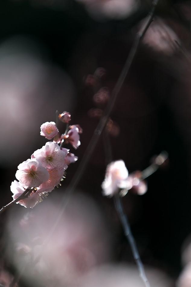 for_pakuriou-44.jpg