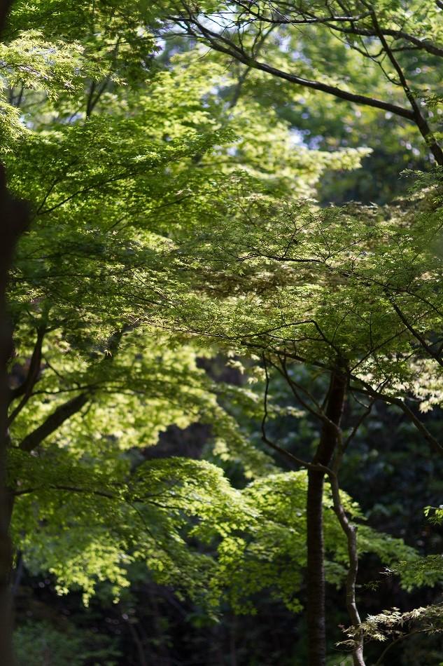 higasshiyama-7.jpg