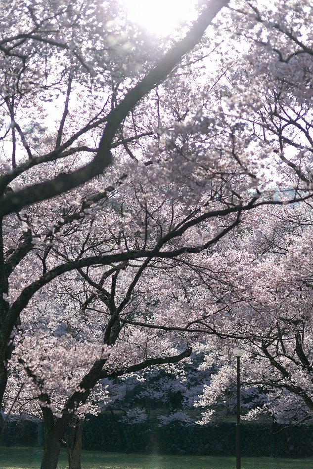 takatou_komisugi-2.jpg