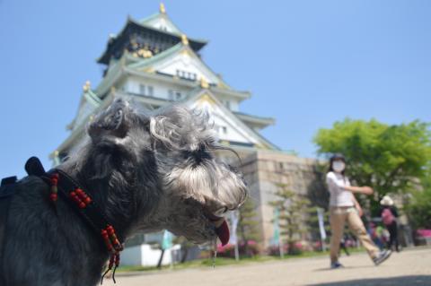 大阪城にてウィル