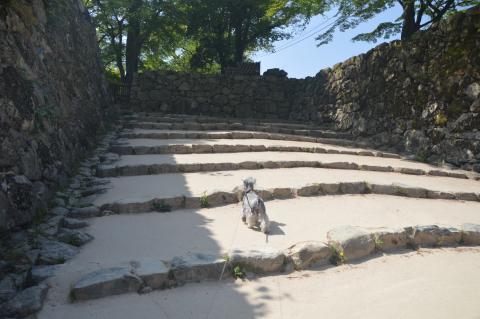 彦根城にてウィル