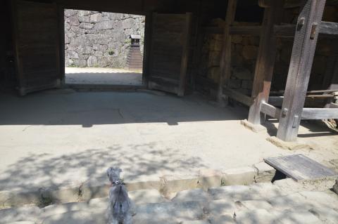 国宝・彦根城にてウィル