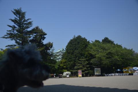 名古屋城にてウィル