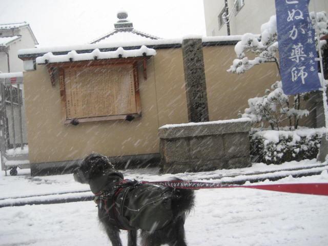 150101元旦大雪さんぽ⑥