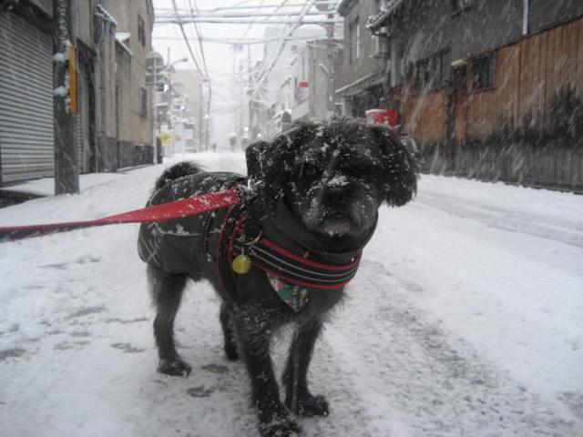 150101元旦大雪さんぽ⑩