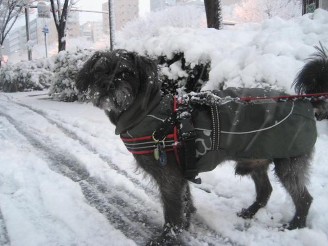 150101元旦大雪さんぽ⑬