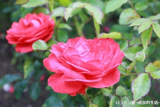 IMG_5068_convert_20150628185944.jpg