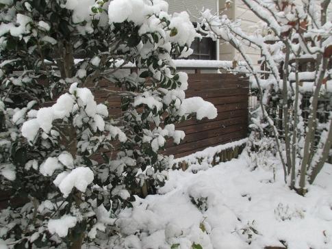 積雪 005-001