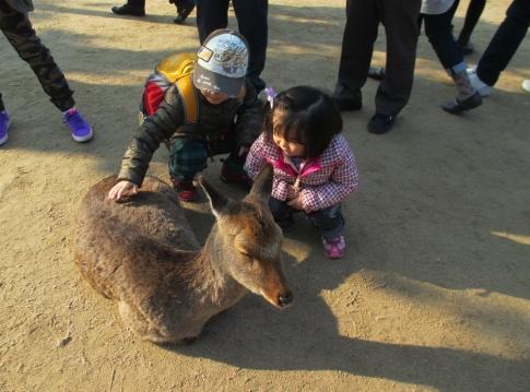 chocoちゃん家族と弥山へ 002-001