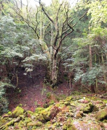 花尾山ハイキング 009-001