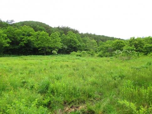 霧ガ谷湿原再生活動 ボランテイア 008-001