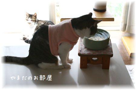 2015.6.4のスーちゃん①