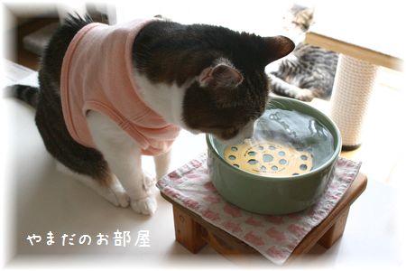 2015.6.4のスーちゃん②