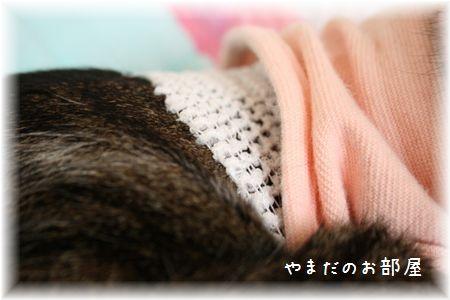 2015.6.11のスーちゃん②