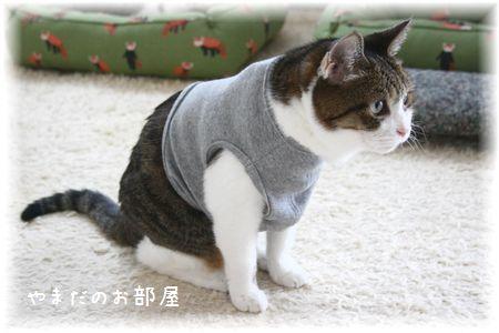2015.6.12のスーちゃん①