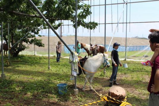 完熟農園 イベント 乗馬