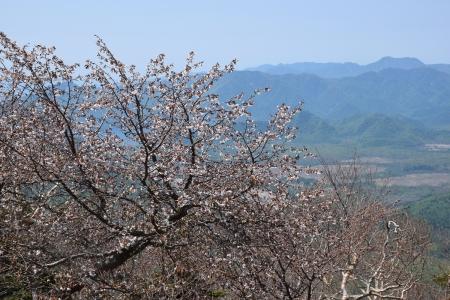 33小太郎山