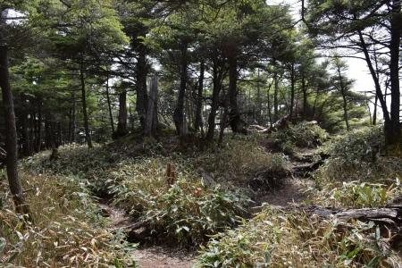 15登山道合流