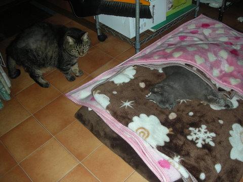 猫たち0167