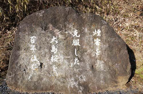 オオシマザクラ碑