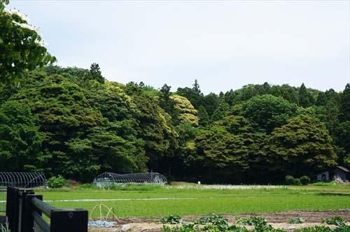 3万葉の森
