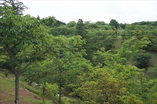 4西山公園