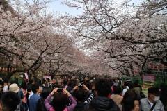 150328上野公園_R