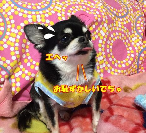 mIMG_0402.jpg