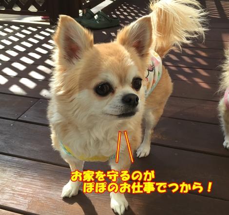 mIMG_0430.jpg