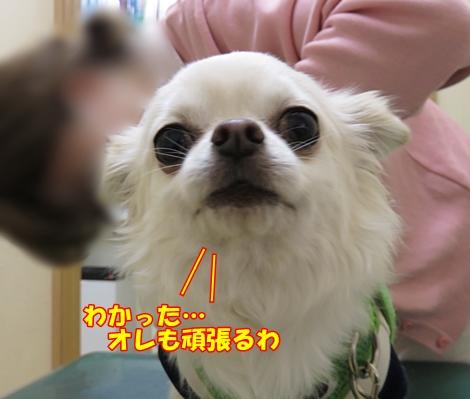 sx700IMG_0934.jpg