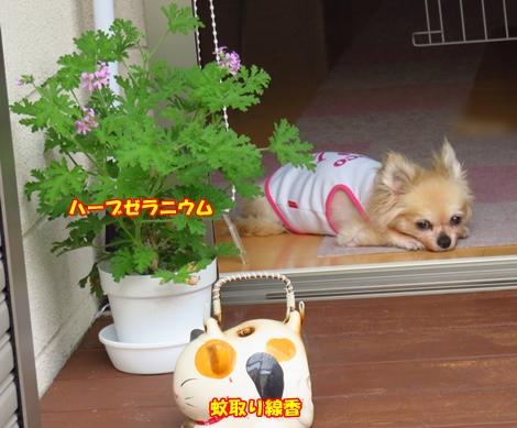 sx700IMG_4779.jpg