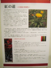 benibana-okegawa150620-112.jpg