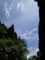 P5170026c.jpg