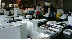 【朝早く魚市場へ】-2