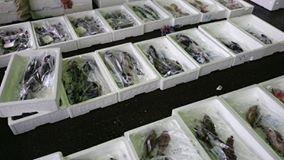 【朝早く魚市場へ】-3