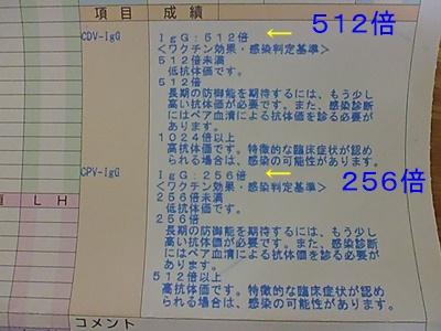P1120701.jpg