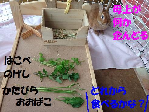 IMG_9158.春の草