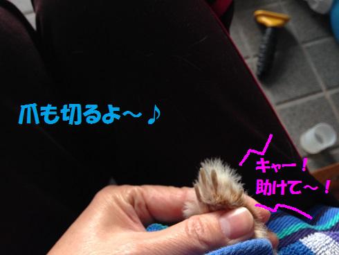 IMG_9194.爪切り