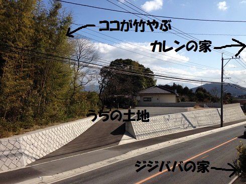 IMG_3824.竹やぶ