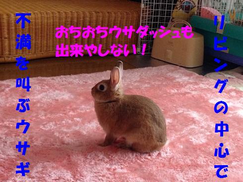 IMG_9333.へやんぽ