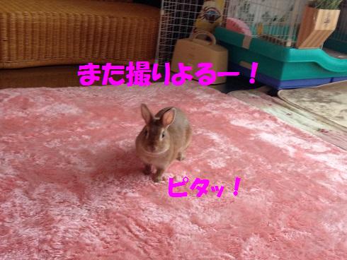 IMG_9329.へやんぽ