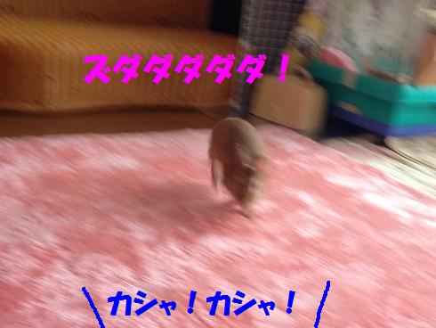IMG_9328.へやんぽ