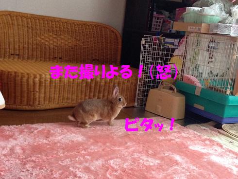 IMG_9327.へやんぽ